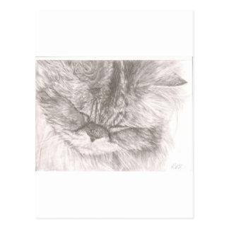 Purring Cat Postcard
