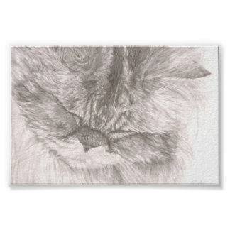 Purring Cat Poster