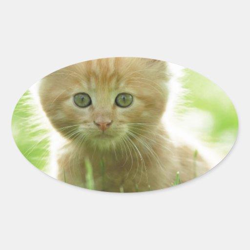 Puss In Fields Stickers