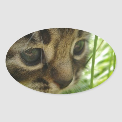 Puss In The Grass Sticker
