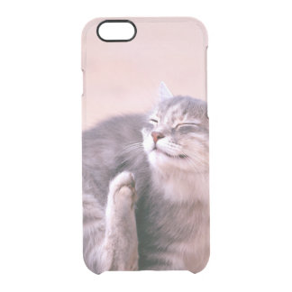 pussy caring clear iPhone 6/6S case
