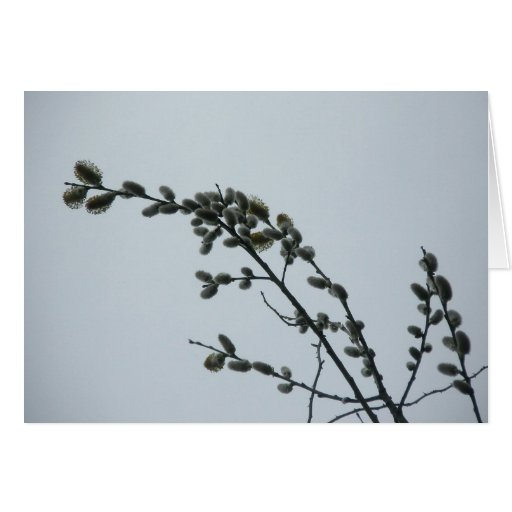 Pussy Willow Note Card