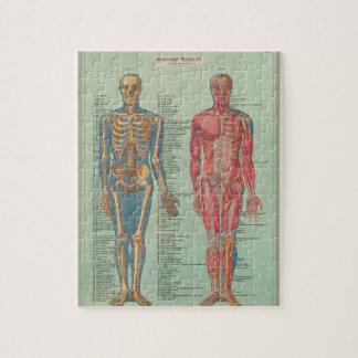 human skeleton jigsaw puzzles   zazzle.co.uk, Skeleton