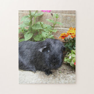 Puzzle - Guinea Pig
