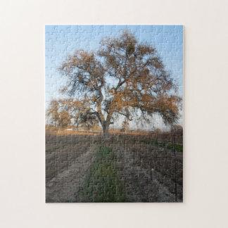 Puzzle: Oak at Veris Vineyard with Mistletoe Jigsaw Puzzle