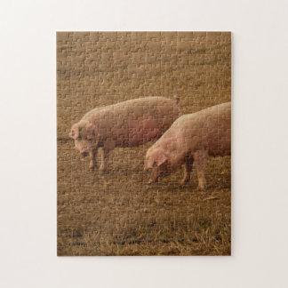 Puzzle - Pigs