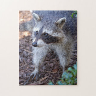Puzzle RACOON RACCOON ~ photo Jean Louis Glineur