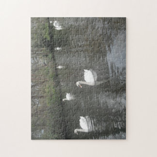 Puzzle Swans Swimming