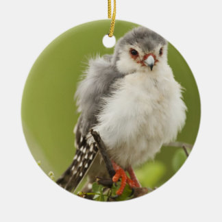 Pygmy Falcon preening itself in a tree Round Ceramic Decoration