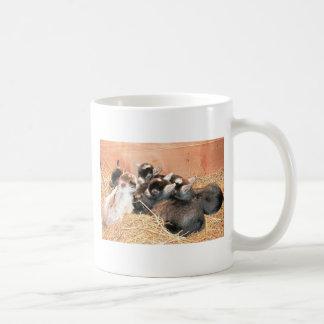Pygmy goat basic white mug