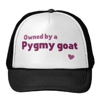Pygmy goat cap