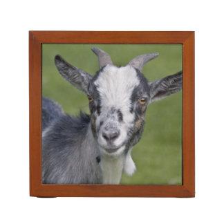 Pygmy Goat Desk Organizer