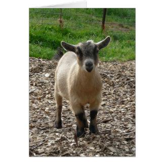 Pygmy Goat Doe Note Card