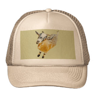 Pygmy Goat Mesh Hats