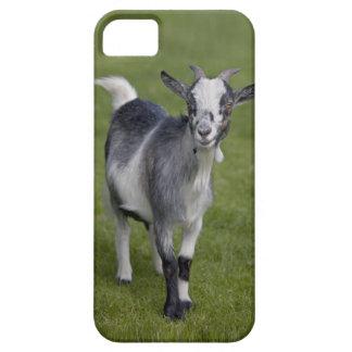 Pygmy Goat iPhone 5 Case-Mate Case