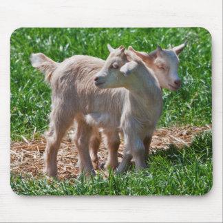Pygmy Goat Kids Mousemat Mousepad