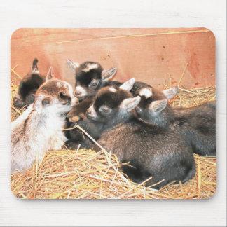 Pygmy Goat Mouse Pad
