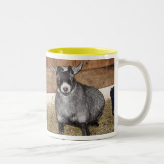 Pygmy Goat, Not a morning person Two-Tone Mug