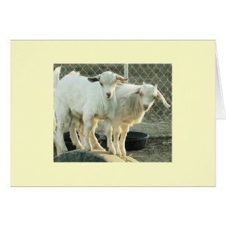 Pygmy Goat Twins Greeting Card