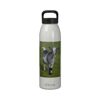 Pygmy Goat Water Bottle