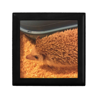 Pygmy  Hedgehog Gift Box
