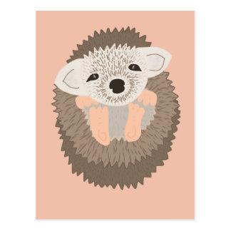 Pygmy Hedgehog is SO Cute! Postcard