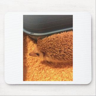 Pygmy  Hedgehog Mouse Pad