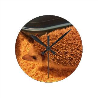 Pygmy  Hedgehog Round Clock