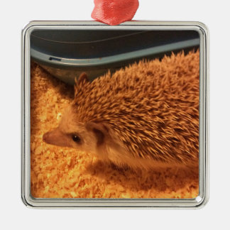 Pygmy  Hedgehog Silver-Colored Square Decoration