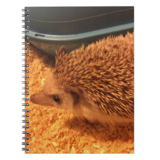 Pygmy  Hedgehog Spiral Note Book