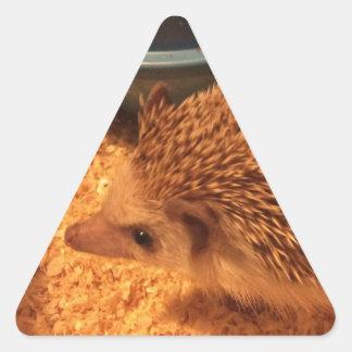 Pygmy  Hedgehog Triangle Sticker