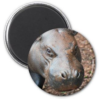 Pygmy Hippo 6 Cm Round Magnet