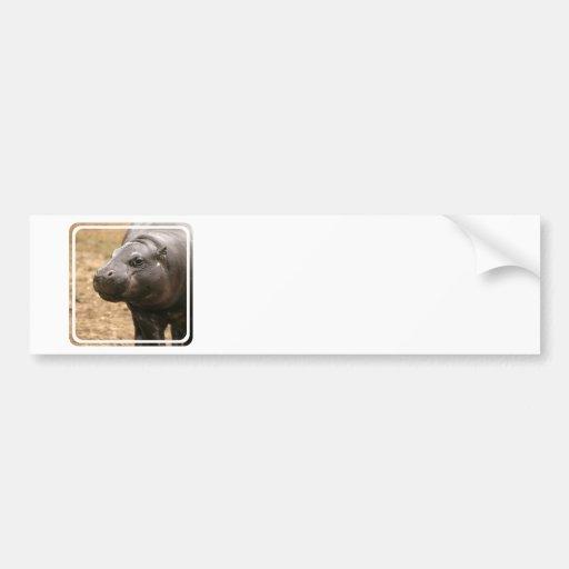 Pygmy Hippo Bumper Sticker