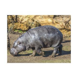 Pygmy hippo canvas print