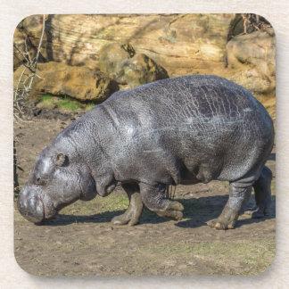 Pygmy hippo hard plastic coasters