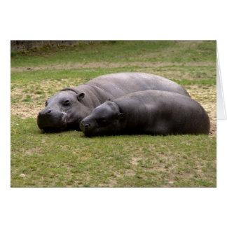Pygmy hippos note card