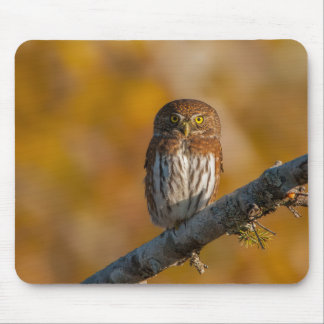 Pygmy Owl against fall colors Mouse Pads