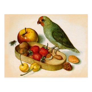 Pygmy Parrot With Fruit and Nuts Post Card