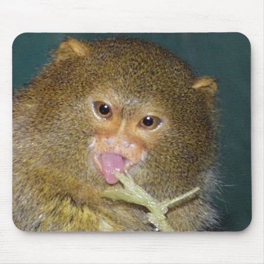 pygmymarmoset10x10 mouse pad