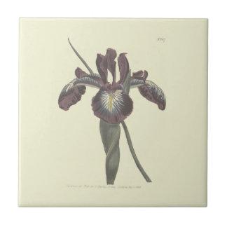 Pyrenean Flag Iris Illustration Tile