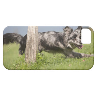 Pyrenean Shepherd goes round the pole Barely There iPhone 5 Case