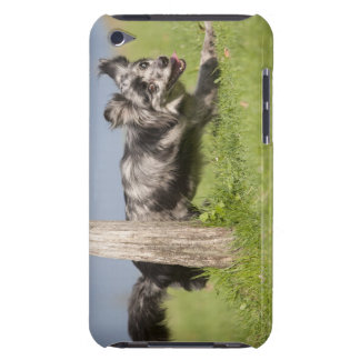 Pyrenean Shepherd goes round the pole Case-Mate iPod Touch Case