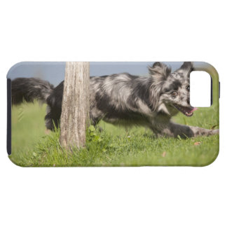 Pyrenean Shepherd goes round the pole iPhone 5 Covers
