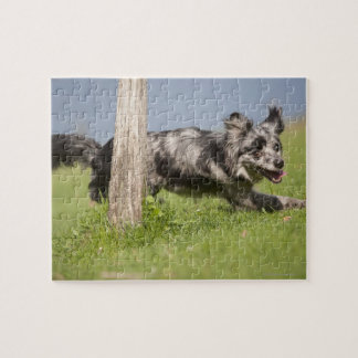 Pyrenean Shepherd goes round the pole Jigsaw Puzzle