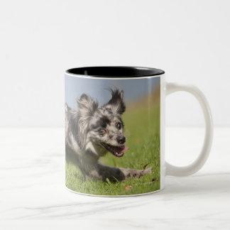 Pyrenean Shepherd goes round the pole Two-Tone Coffee Mug