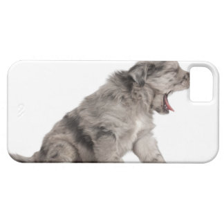 Pyrenean Shepherd puppy (4 weeks) yawning iPhone 5 Cover