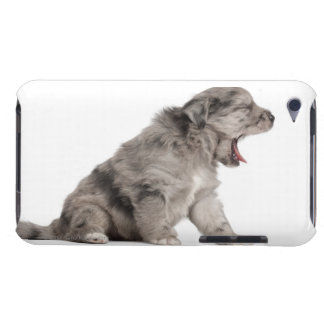 Pyrenean Shepherd puppy (4 weeks) yawning iPod Case-Mate Cases