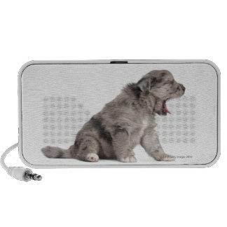 Pyrenean Shepherd puppy (4 weeks) yawning Mini Speakers