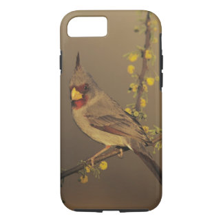 Pyrrhuloxia, Cardinalis sinuatus, male on iPhone 8/7 Case