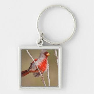 Pyrrhuloxia Cardinalis sinuatus male perched Key Chain